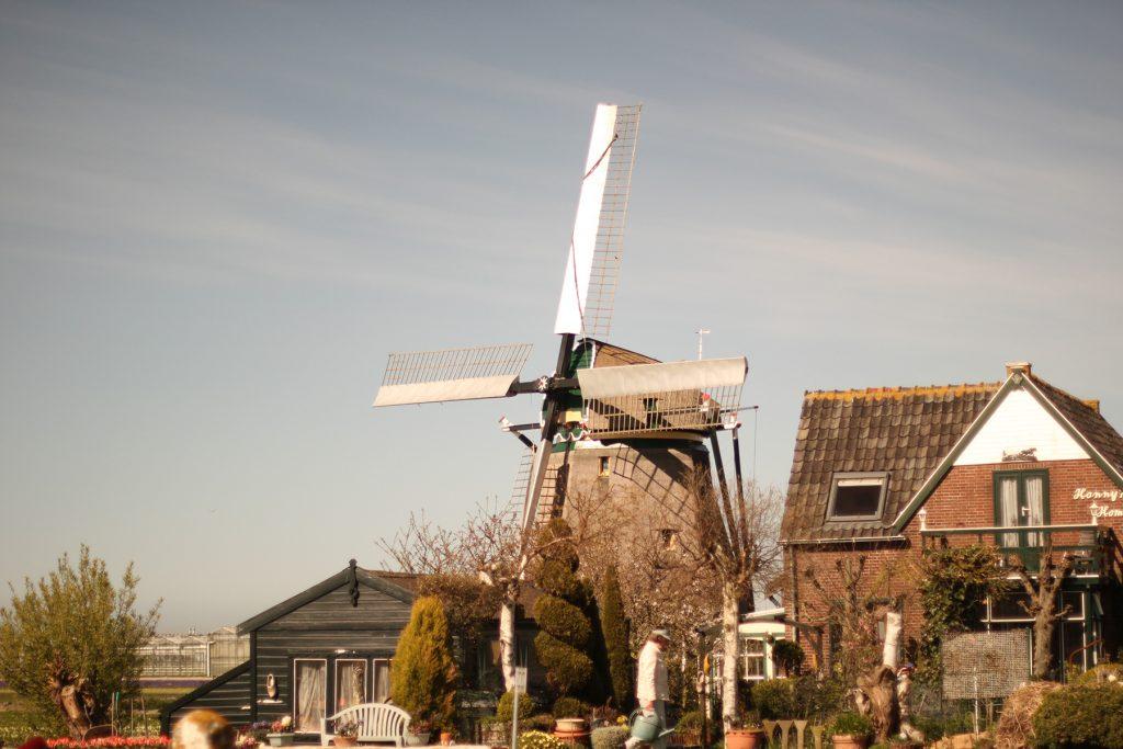 オランダの風車 #1